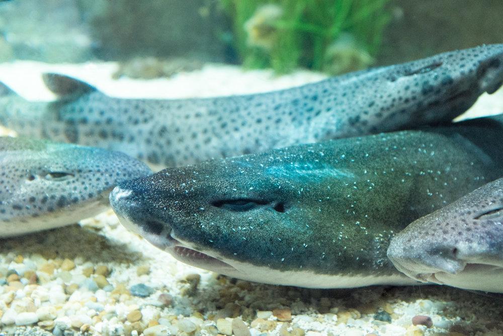4548-portugal-aquarium-fish.jpg