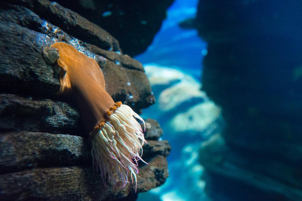 4579-portugal-aquarium-fish.jpg