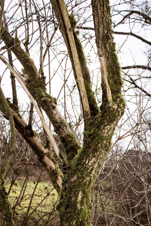 -north-rhine-westphalia-best-nature-walks-4.jpg