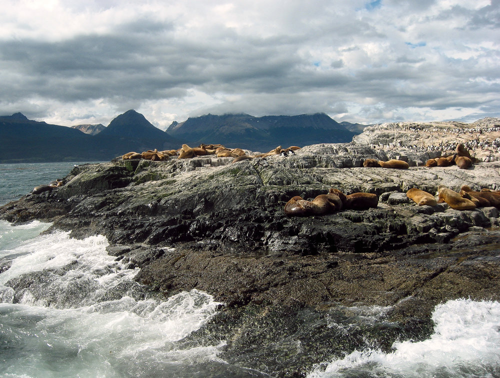 tierra-del-fuego_ushuaia_boattour-beagle-channal-4674.sealions-from-boat.jpg
