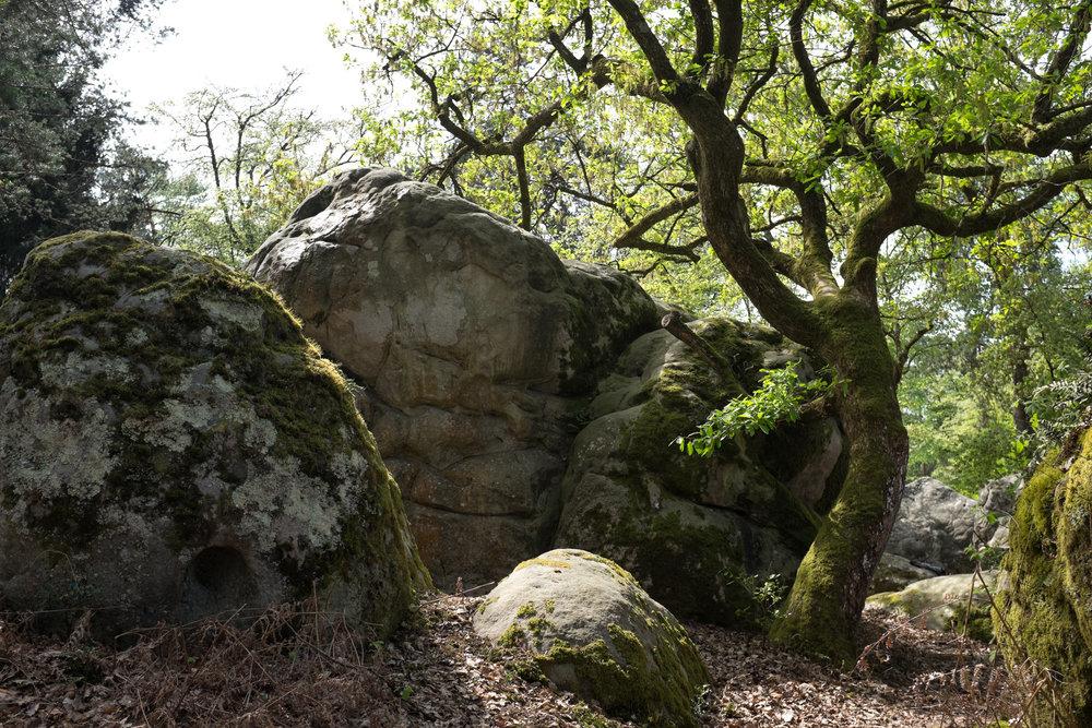 9359-nature-boulder-canyon.jpg