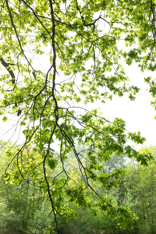 9401-nature-spring-green.jpg
