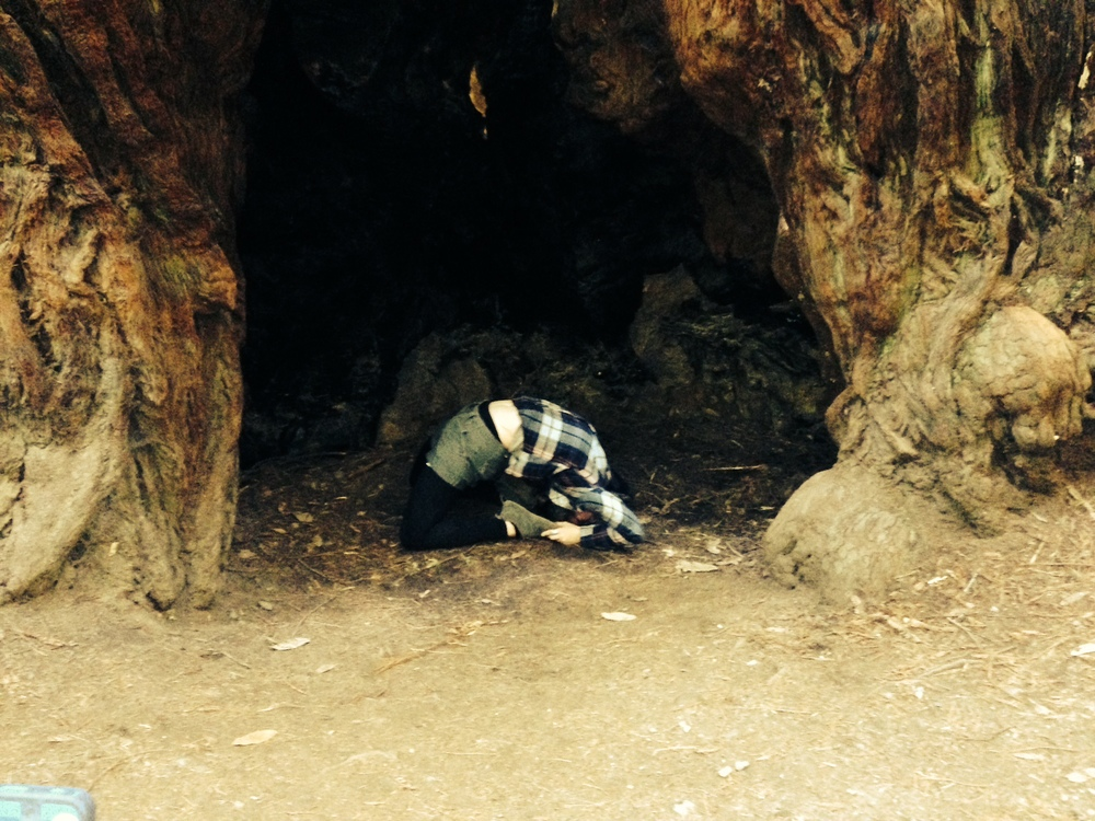 kapotasana in a redwood.JPG