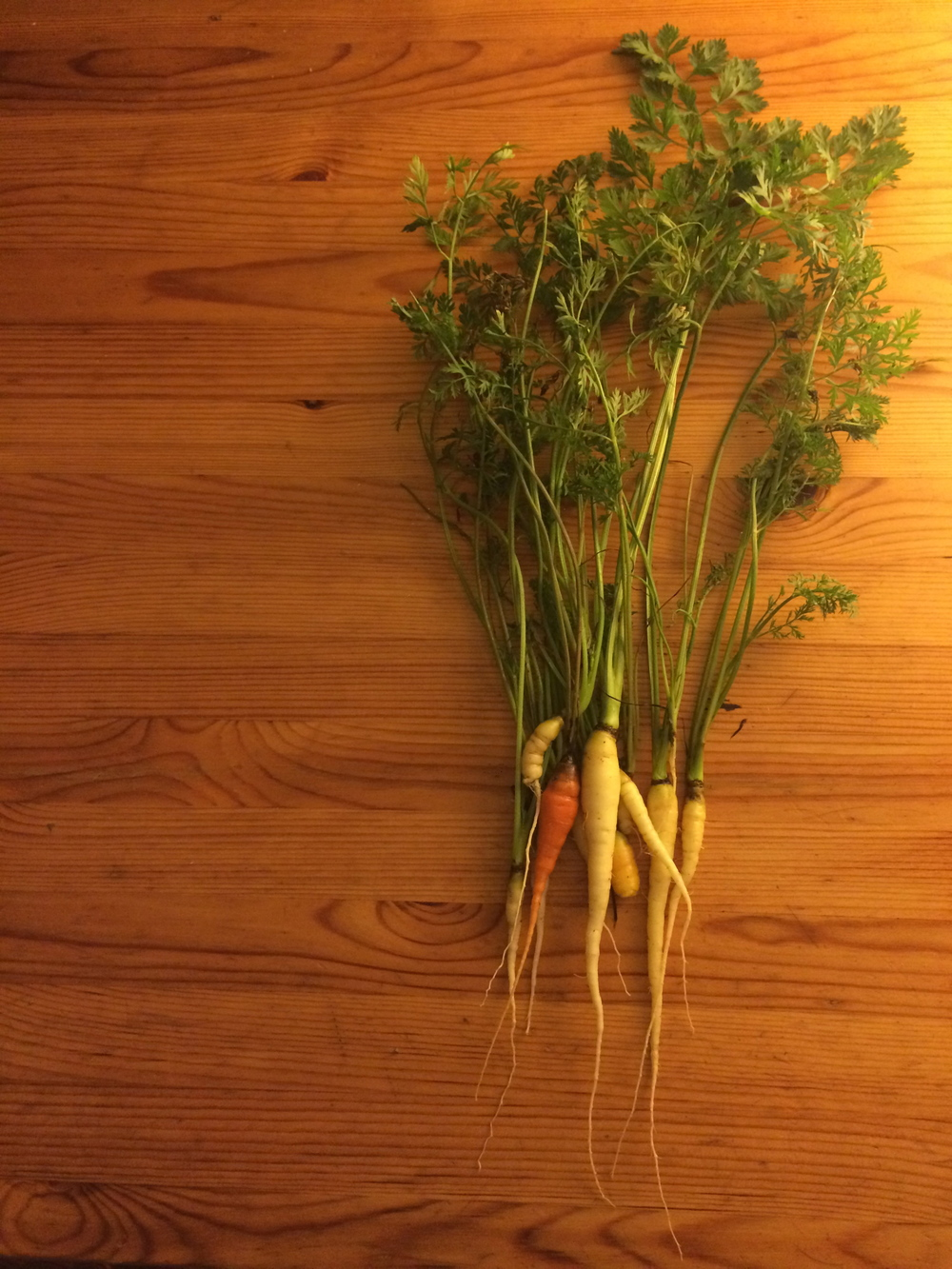 homegrown carrots.jpg