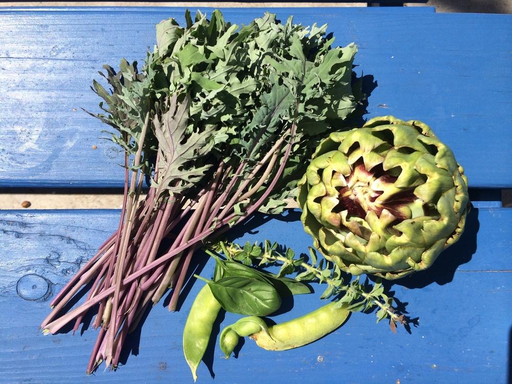 first harvest.JPG