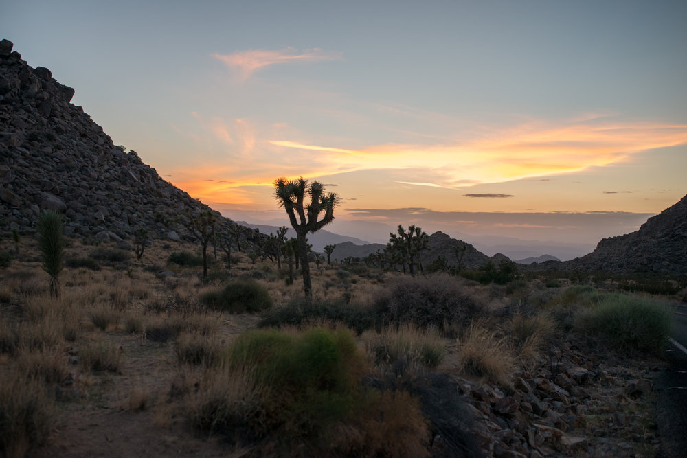 Joshua Tree National Park - Nikon D800 - Sigma 20-35mm F2 @ 35mm 1/320 F3.2