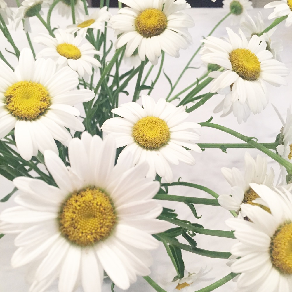 daisies are the happiest flowers