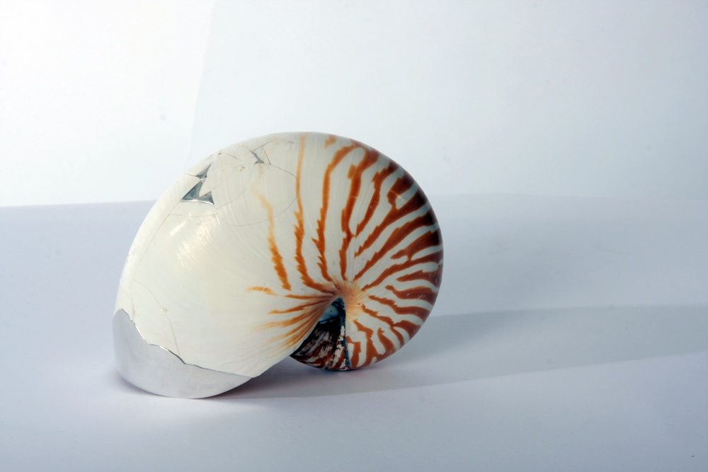 Nautillus shell_side.jpg