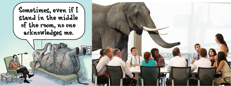 The Elephant in the Room — Sibley Innovation Hub