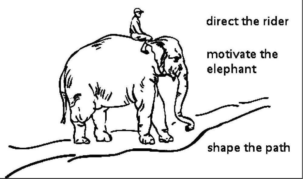 rider-elephant-path.jpg