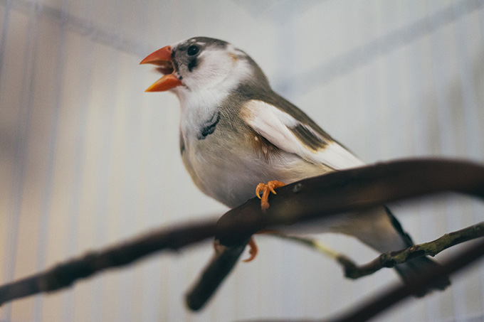 Atticus the Studio Finch