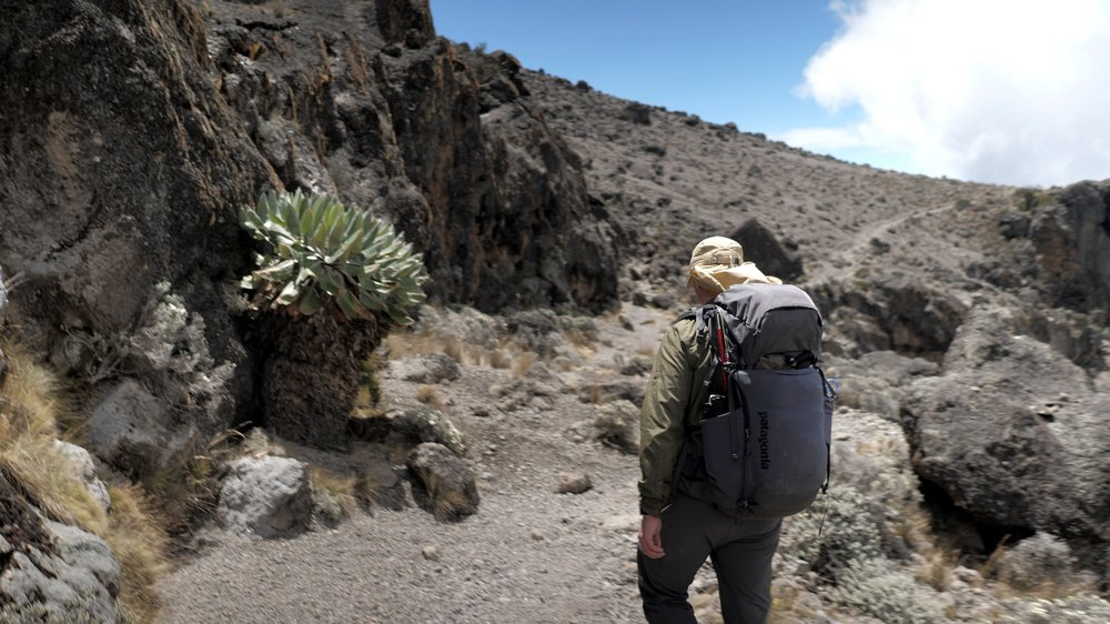 GEAR: PAtagonia nine trails 36L backpack / LEKI Micro carbon sticks
