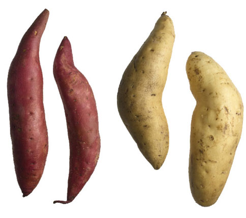 white and sweet potatoes.jpg