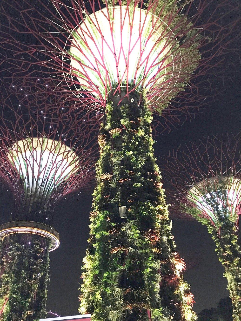 Rocio in Singapore