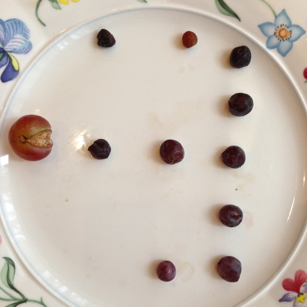 "Breakfast ingredients can prove to be a great diversion if you have a creative mind.  Here we have ""Organic Pacman."""