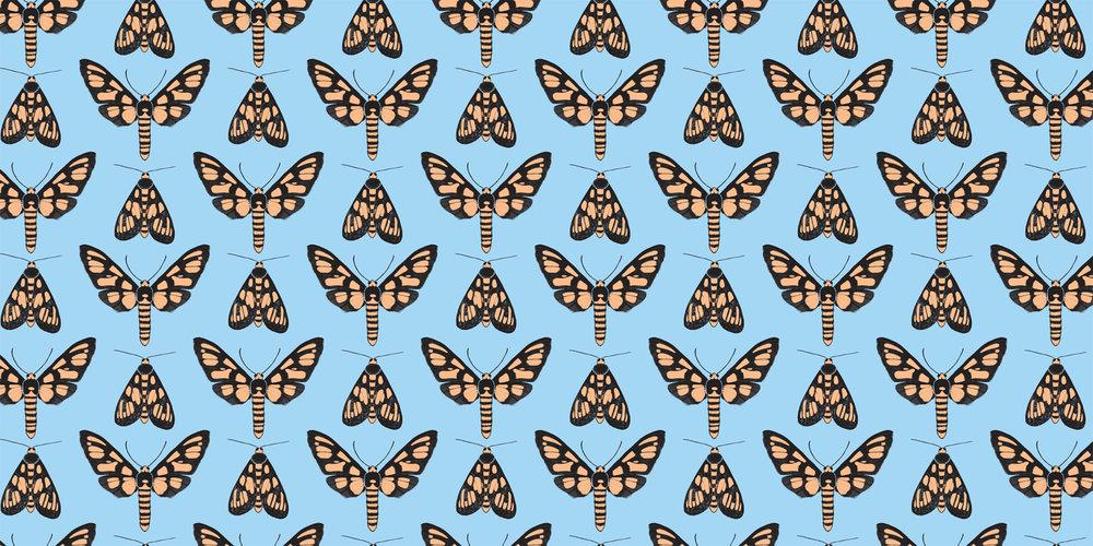 Tiger Moth -