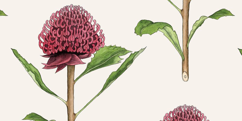 Botanical Waratah - MURAL