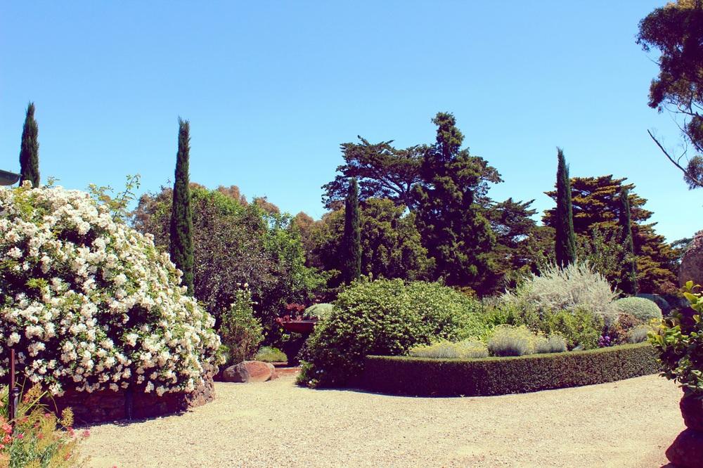 garden12.jpg