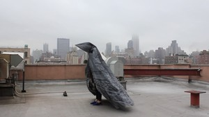 Melissa Deerson, Pigeon Project, 2014. Image courtesy and © the artist