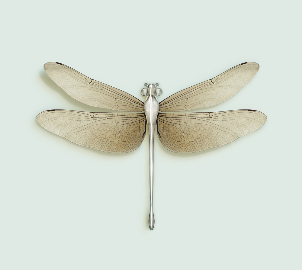 DRAGONFLY [Chloromgonfus detectis]  82 x 92.9 cm / 32.28 x 36.57 inch.