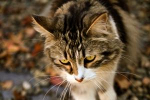 cat-hunting.jpg