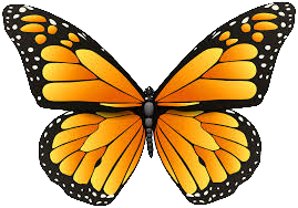 butterfly_03.png