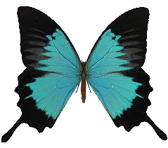 butterfly_04.png