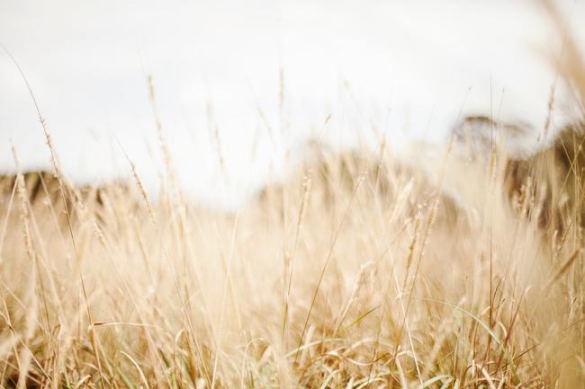 s-meadows1.jpg