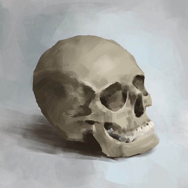 Quick skull study done between renders.  Photoshop, Wacom Intuos. #sketch #study #painting #photoshop #art