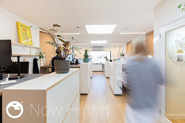 If you've ever wanted to be a blurry spectre haunting our office corridors, NOW IS YOUR CHANCE! @jackywinter is looking to hire a multitude of peoples (Design all-rounder, Christmas Casual & PR Support) to come do good things with us! More deets at jwg.is/hiringafewpeople (and in bio) (Photography by Tatanja Ross / @on_jacksonstreet)