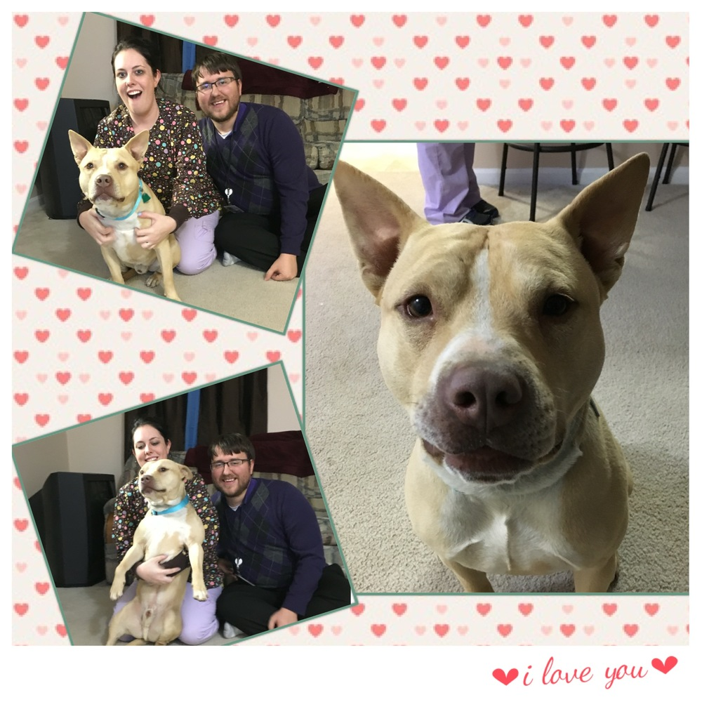 Perry melted the hearts of Kim and Adam and found his furever home!