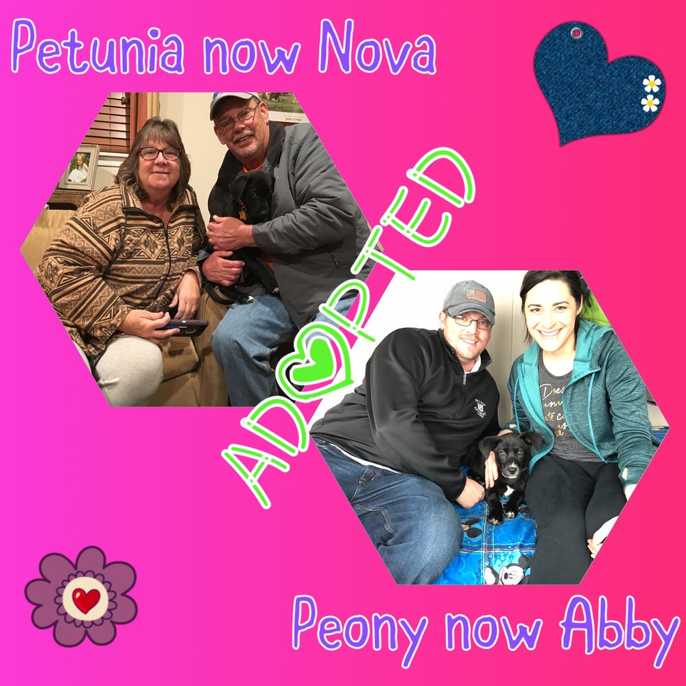 Petunia and Peony found their perfect homes!