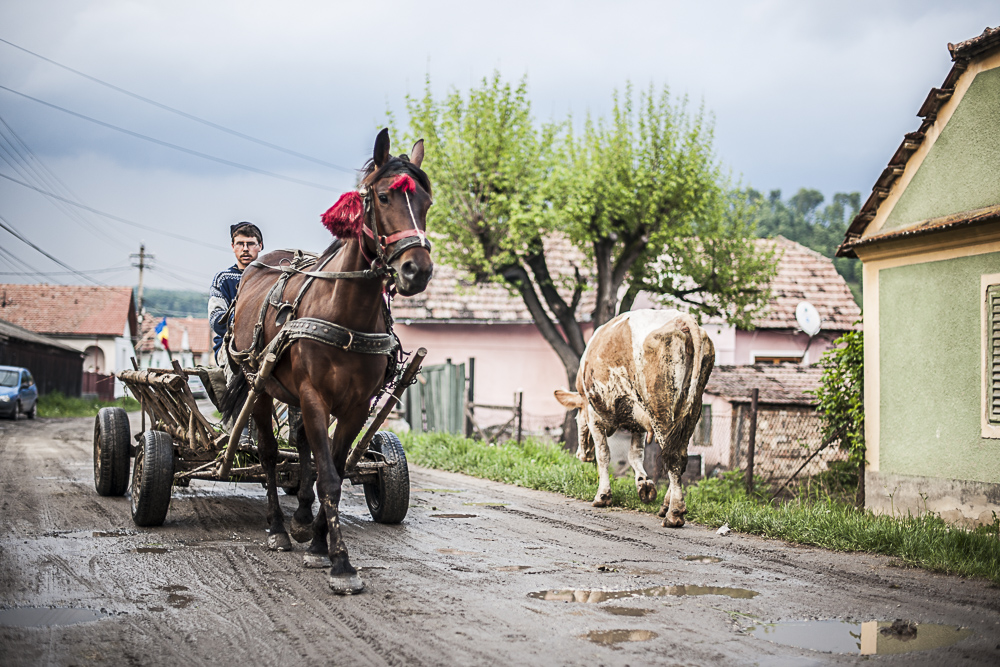 Locals still get around using a traditional horse and cart.JPG