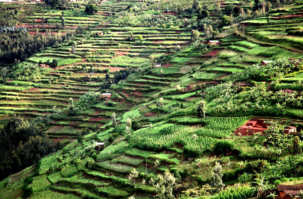 Rwandan Terracing - web.jpg