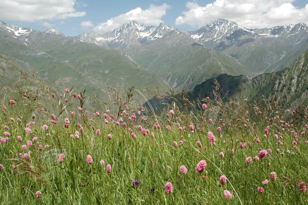 flowers & Mountains.jpg