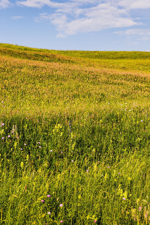 Wildflowers Transylvania