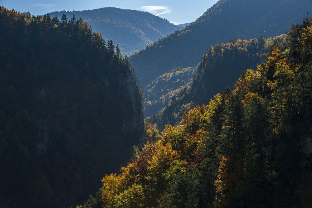 _DTR4580-2_Forest.jpg
