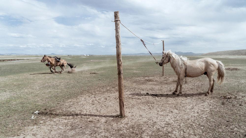 Mongolia 2017 Harry Fisch 2000sin título2017-06381_PS.jpg