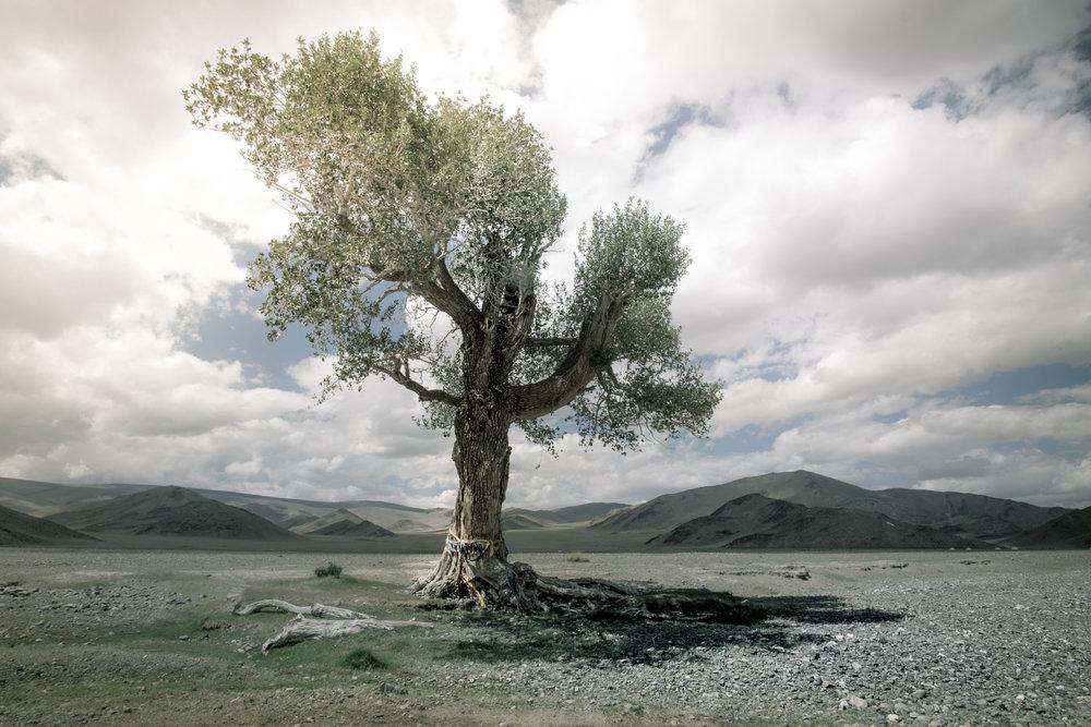 Mongolia tree Harry Fisch sin título2016-9239.jpg