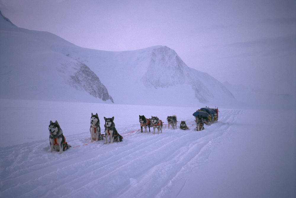 Trans-Antarctica dog sled team on the Antarctic Peninsula. Photo ©Will Steger