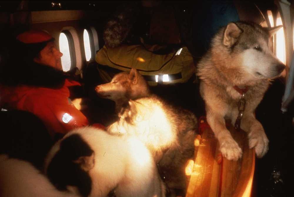 Jean-Louis Etienne and some of the expedition dogs ride a Twin Otter to the expedition start on Seal Nunataks. ©Will Steger by Victor Boyarsky