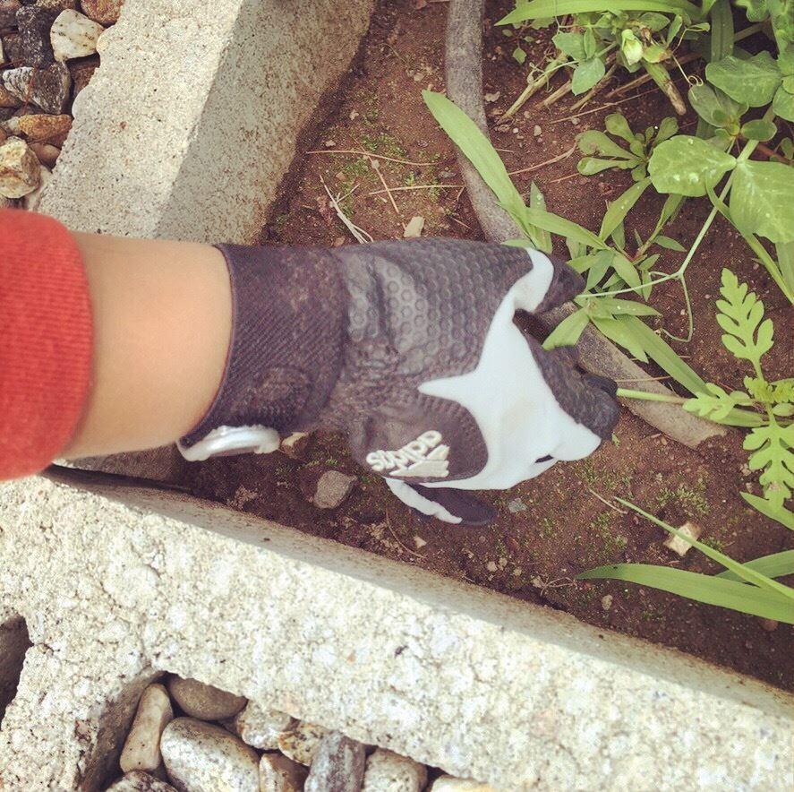 Garden glove.jpg