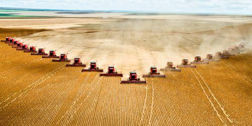 Industrial Scale Monocultures
