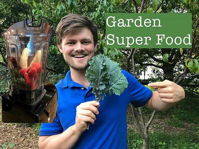 Quick video showing how easy it is to add super foods picked fresh from the garden. Add garden greena to a delicious berry smoothie for a tasty healthy lunch! Video link in bio. 🌱😃
