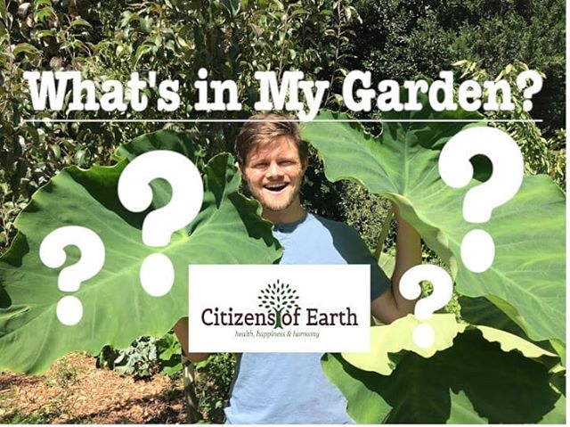 New video up now! Link in bio!  Follow me on my adventure through the garden and learn more about what is growing and why food forest gardening supports our local environment!  #CitizensofEarth #Garden #Organic #Permaculture #Ediblelandscape #Fresh #Health #Happiness #Harmony #Sustainable #foodforest #plant #planting #vegetable #natural #nature #lifestyle #organic #flower #farming #farmer #gardener #culture #plantbased