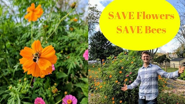 Save the bees by saving seeds! 🐝 One of my passions for gardening is the experience of living in harmony with nature and it is an incredible feeling to see the positive influence a garden may have on our ecosystem!  Flowers are vital for bees and in this video I show how to save seeds and how flowers help save our bees! 🌻🐝