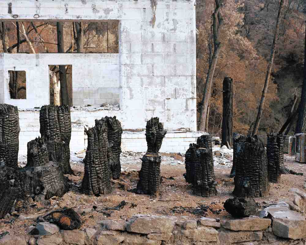 ATF Burnt Stumps.jpg