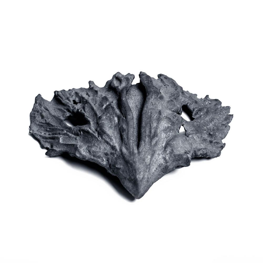 moth2.jpg