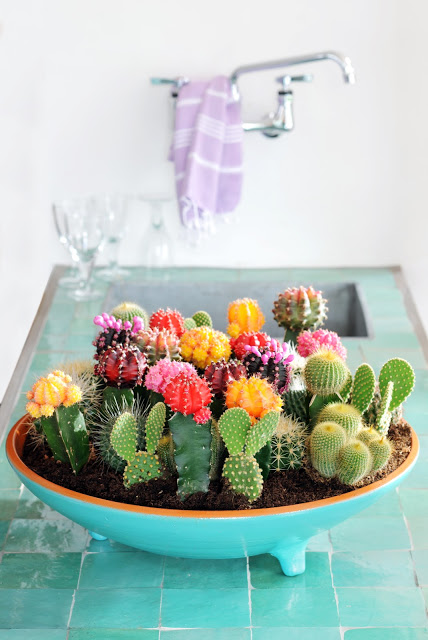 Blue Succulent Design in the Kitchen