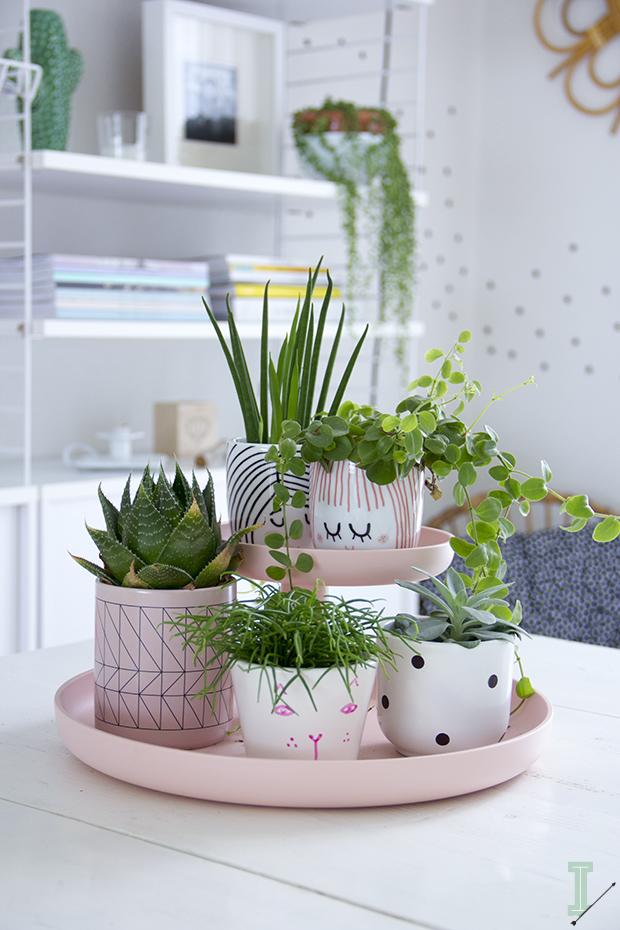 Pink Succulent Design